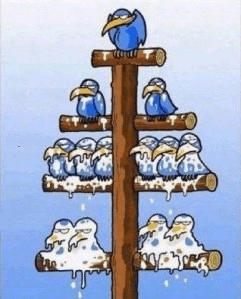 Pyramid-Sheme-MLM-Networks